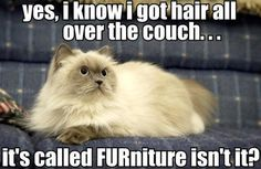 I know I got hair all over the couch… - http://funnypicturequotes.com/i-know-i-got-hair-all-over-the-couch/
