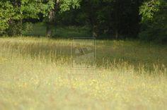 doe in the field by pixizone on deviantART