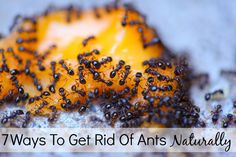 Ants are a total pain – but how can one get rid of them without harmful chemicals?? Here are 7 natural ways to get rid of pests like ants without harming your family and pets!