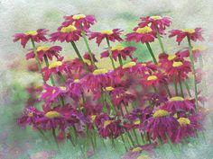 August Floral Garden