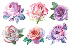 Romantic set of 6 watercolor roses by MyStocks on @creativemarket