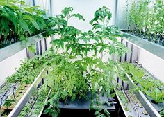 Soil-less gardening is very much famous around the world. Hydroponic is one of the best technique to grow any kind of plants organically without soil.