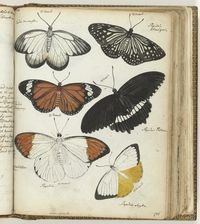 Butterfly-Collected Works of Cathy Barber - All Rijksstudio's - Rijksstudio - Rijksmuseum Still Picture, History Images, Natural History, Moth, Insects, Creatures, Butterfly, Pictures, Animals
