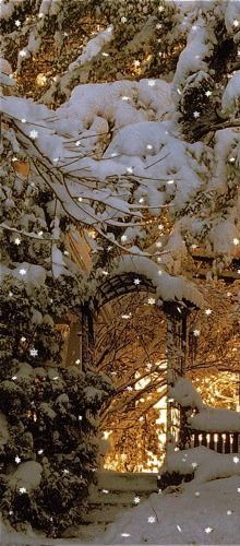 snowy night in the garden