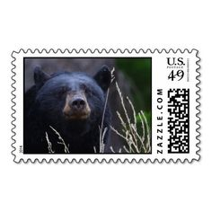 >>>Are you looking for          bear postage stamp           bear postage stamp Yes I can say you are on right site we just collected best shopping store that haveShopping          bear postage stamp please follow the link to see fully reviews...Cleck Hot Deals >>> http://www.zazzle.com/bear_postage_stamp-172249976072288946?rf=238627982471231924&zbar=1&tc=terrest