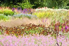 The Millennium Garden at Pensthorpe, Norfolk, designed by Piet Oudolf, who is landscaping the gallery's gardens. Photograph: Alamy