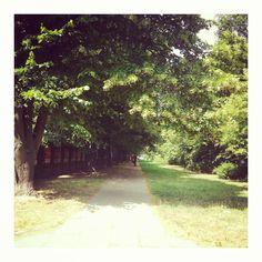 Piękna, cicha , zielona okolica. To wymarzone miejsce na Twoje mieszkanie! #home #mieszkanie #natura #zieleń
