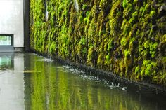 Toronto Gardens: Inspiration from Iceland: Moss Living Walls