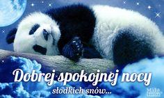 Panda Bear, Humor, Animals, Texts, Text Posts, Cute Drawings, Night, Cheer, Animaux