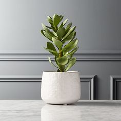 Shop Potted Faux Succulent White Pot Textured white stoneware vessel pots a forever-green faux succulent. Brings soothing vibe to any environment and requires zero care. Faux Plants, Succulent Pots, Cacti And Succulents, Planter Pots, Cactus Plants, Faux Olive Tree, Ikea, Forever Green, White Pot