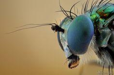 Long Legged Fly by AlHabshi on deviantART