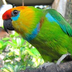 Things that make you go AWW! Like puppies, bunnies, babies, and so on. A place for really cute pictures and videos! Exotic Birds, Colorful Birds, Bird Breeds, Budgies, Parrots, Australian Birds, Beautiful Birds, Pet Birds, Mother Nature