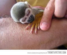 Baby monkey ~ So many babies are born in the spring ~ and they're all adorable