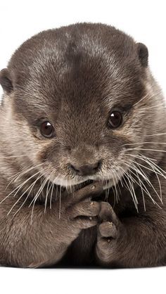 Baby otter ✿⊱╮ Beautiful Pictures