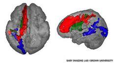 Entre los dos y los cuatro años el cerebro abre una importante ventana para el desarrollo del lenguaje. Esta fue la conclusión de un estudio realizado por científicos británicos y estadounidenses. (Fuente: BBC)  http://permanenciasvoluntarias.wordpress.com/2013/10/14/que-pasa-en-el-cerebro-de-los-ninos/