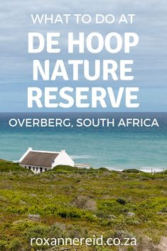 Planning a visit to the De Hoop Nature Reserve in the Overberg? Find out about De Hoop Nature Reserve accommodation as well as lots of things to do. Think game viewing, guided nature drive, an interpretive marine walk, a hike to a viewing platform at Potberg to see Cape vultures, eco-boating cruise on the vlei, whalewatching, the Whale Trail, hiking, mountain biking, birding, stargazing and the De Hoop Fig Tree restaurant. Kruger National Park, National Parks, All About Africa, Tree Restaurant, Visit South Africa, Slow Travel, Fig Tree, African Safari, Nature Reserve