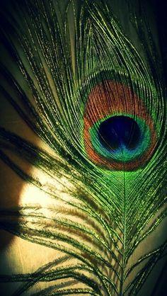 Floral Wallpaper Iphone, Feather Wallpaper, Animal Print Wallpaper, Peacock Artwork, Peacock Painting, Shree Krishna Wallpapers, Lord Krishna Hd Wallpaper, Radha Krishna Images, Lord Krishna Images