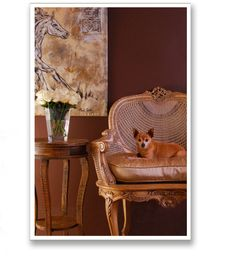 My own little guy P.J.  www.ladesignportfolio.com  #Animals, #Dogs, #Interiors, #Furniture