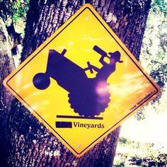 This is perfect for El Dorado County vineyards! Wine Pics, Wine Bottle Art, Wine Bottles, Wine Craft, Wine Quotes, Wine Making, Wine Cellar, Wine Recipes, Wines