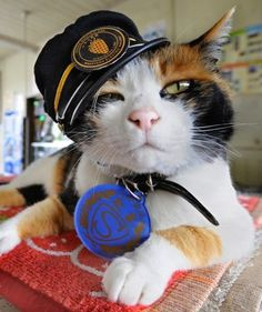 Tama the cat has several titles to her name: station master, celebrity and CEO. After the cat was adopted by a Japanese train station, she rose to fame, attracting tourists from around the world.