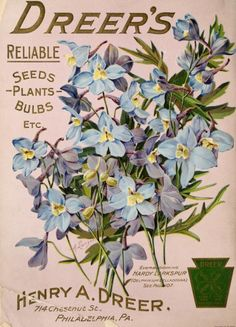 Everblooming Hardy Larkspur (Delphinium Belladonna). Back cover illustration from 'Dreer's Garden Book 1906.' Henry A. Dreer. 714, Chestnut St, Philadelphia, P.A. U.S. Department of Agriculture, National Agricultural Library archive.org