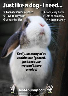 Just like a dog - a rabbit needs... Lots of exercise & space Toys to play with A healthy diet A safe, cosy home Lots of company A loving family It's so sad that so many people fail to know what rabbits need to live a happy life, yet so many will know exactly what a dog needs. www.best4bunny.com
