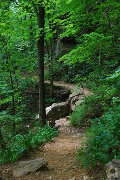 The Ozarks, Arkansas... I would love to hike this trail but fear I may run into to many bugs:-(