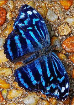 Borboletas,Mariposas,Lagartas (lepidoptera) - Comunidade - Google+