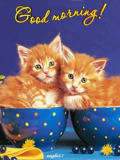Cute Good Morning Cats With Quote                                                                                                                                                      More
