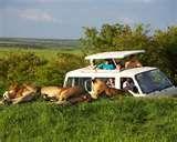 An African Safari............would love it.