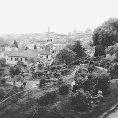 Giardino sul panorama (Giuseppe Mammoli)