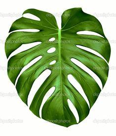 hawaiian ginger plant drawing - Google Search