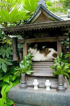 Meditating Cat shinto shrine