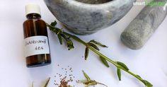 Das Öl der Nachtkerzen ist ein wunderbares, wenn auch teures Hautpflegeprodukt…