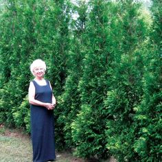 American Pillar - Arborvitae - Thuja occidentalis East side of drive. Privacy Hedges Fast Growing, Shrubs For Privacy, Privacy Trees, Privacy Landscaping, Landscaping Ideas, Outdoor Landscaping, Outside Plants, Outdoor Plants, Outdoor Gardens