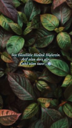 Quotations, Qoutes, New Day, Instagram Story, No Time For Me, Islam, Words, Life, Argo
