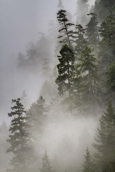 Trees in Mist by The Flannel Photographer (flannelphotographer.com, via Flickr