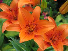 Orange, Arboretum Volčji Potok