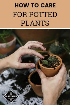 Learn these gardening tips for potted plants and houseplants, including tips on container selection, soil for pots, watering containers, pests and sunlight needs. #gardeningchannel #containergardening #houseplants #containergarden #indoorgarden