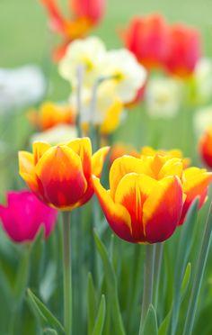 Flaming Spring!