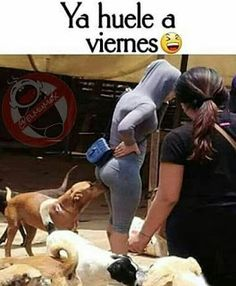Memes Dirty Jokes Funny 49 Ideas For 2019 Dirty Jokes Funny, Funny Adult Memes, Adult Humor, Hilarious, Awkward Funny, Funny Spanish Memes, Spanish Humor, Funny Dog Pictures, Funny Photos