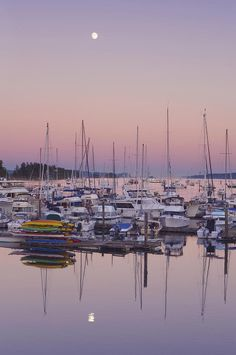 ✯ Full Moon Over Ganges Harbor -Saltspring island, where I'll be this weekend ; Salt Spring Island Bc, Arbutus Tree, Places To Travel, Places To Go, Canadian Cuisine, Sailing Yachts, O Canada, True North, What A Wonderful World