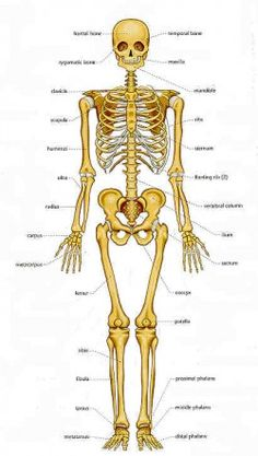forensic anthropology | Forensic anthropology - Insight into anthropos-logia