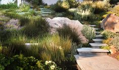 Love the grasses   (board original: Steve Harris, NY)