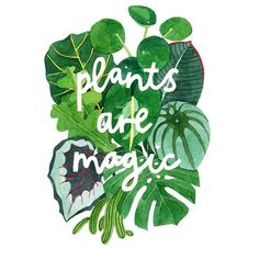 Flores Artscape creates award-winning landscape designs that will revitalize your home. Learn more about why we're a top-rated landscaping company here. Philodendron Scandens, Plants Quotes, Garden Quotes, Magic Art, Plant Illustration, A4 Poster, Plant Care, Botanical Prints, The Magicians