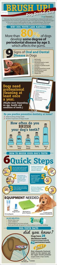 Dog Dental Care Infographic