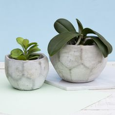 Concrete Geometric Shape Cement Plant Terrarium Planter Pots Home Gift Interior Cement Pots, Concrete Planters, Planter Pots, Interior Garden, New Home Gifts, Window Boxes, Plant Care, Potted Plants, Geometric Shapes