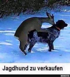 Jaghhund zu verkaufen..   Lustige Bilder, Sprüche, Witze, echt lustig