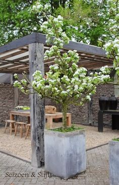 Solid structures and soft blossom / repinned by Llewellyn Landscape & Garden Design www.llgd.co.uk - design | create | maintain