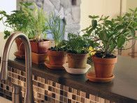Learn how to grow an indoor herb garden with this step-by-step guide from HGTV Gardens.